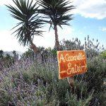 Cafe a Casarella1 150x150 - 10 Tage Geheimnisse: Roadtrip im Zelt durch Korsika  – Teil 1